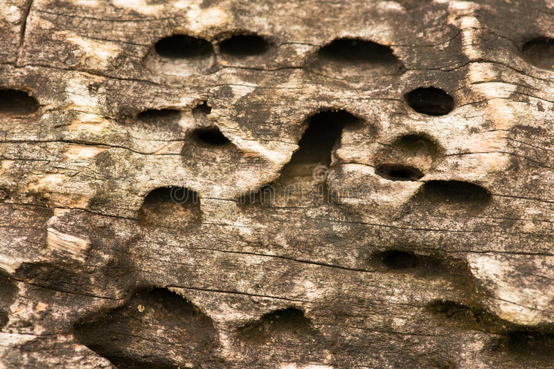 Download Wooden Hole stock photo. Image of texture, abstract, hole - 24992642
