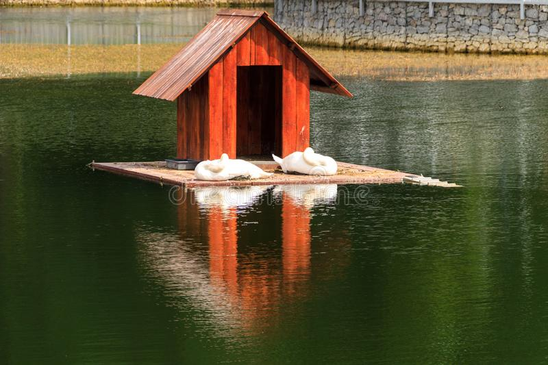 Wooden house for swans on a lake in city park royalty free stock photography