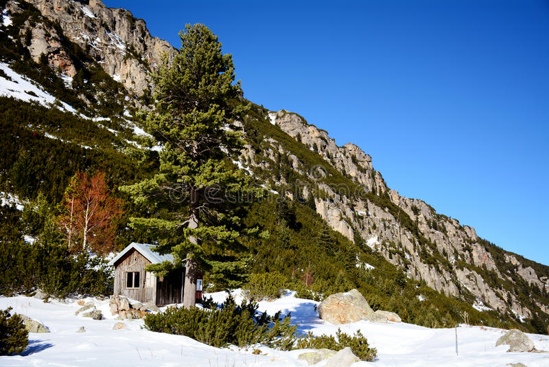 Wooden house in a winter pine forest. Wooden cottage on the peak of a Snow Mountain in Bulgaria ,Borovets stock images