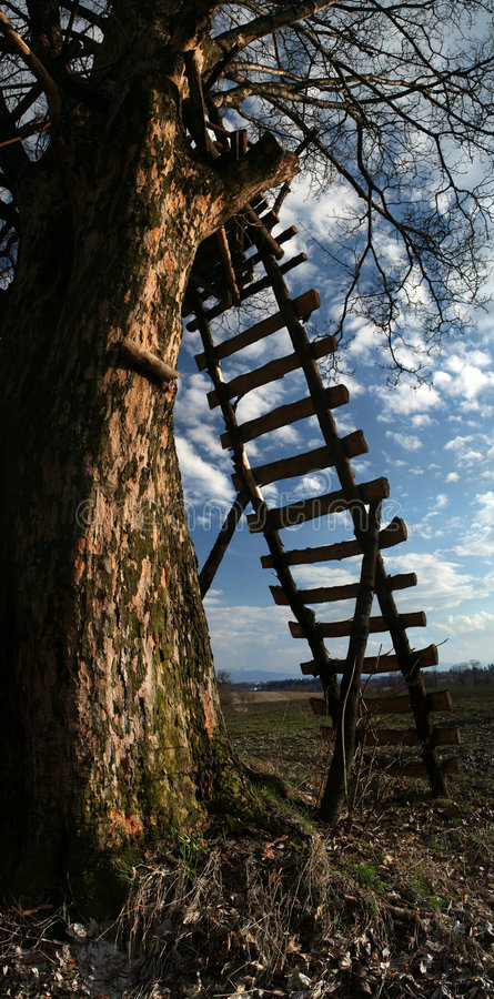 Wooden Ladder Stock Images