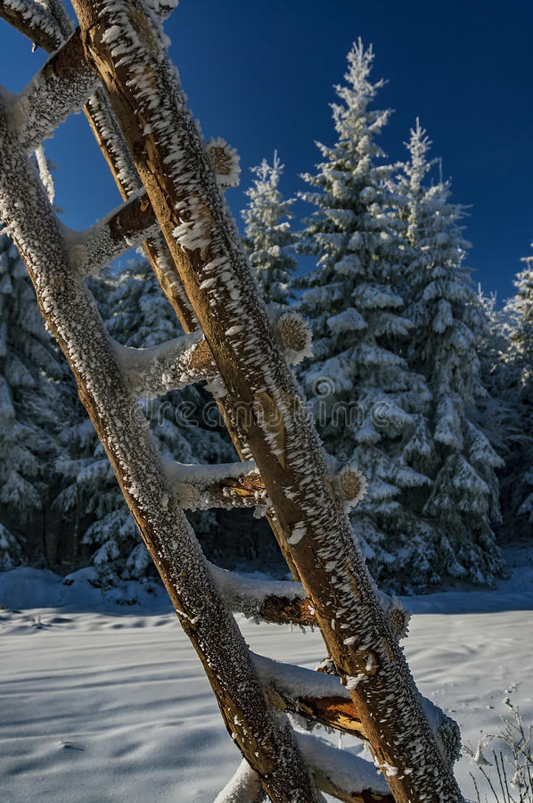 Wooden ladder in winter. View of a wooden ladder with coniferous trees on background stock photos