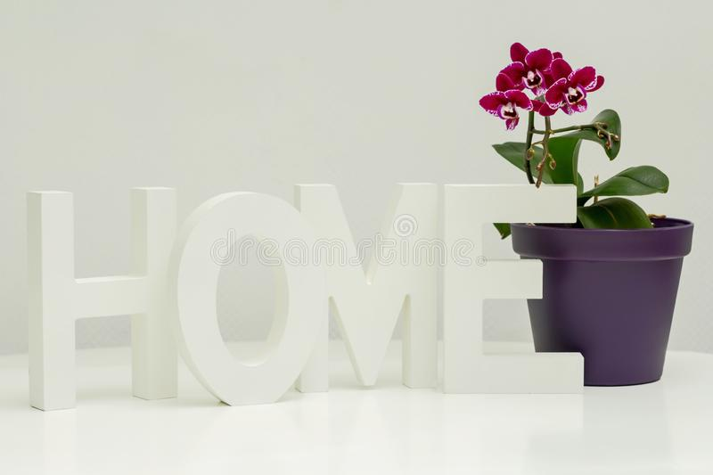 Wooden letters and pink orchid royalty free stock images