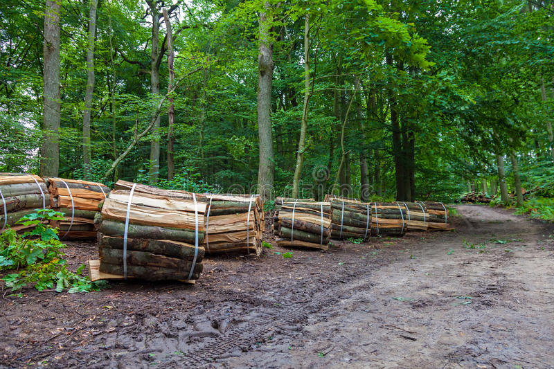 Wooden logs bundled. In a forest royalty free stock image