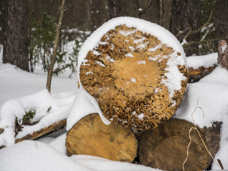 Wooden logs under snow royalty free stock photos