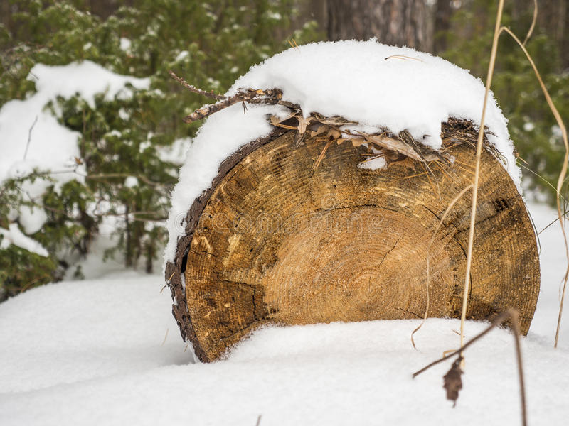 Wooden logs under snow royalty free stock image