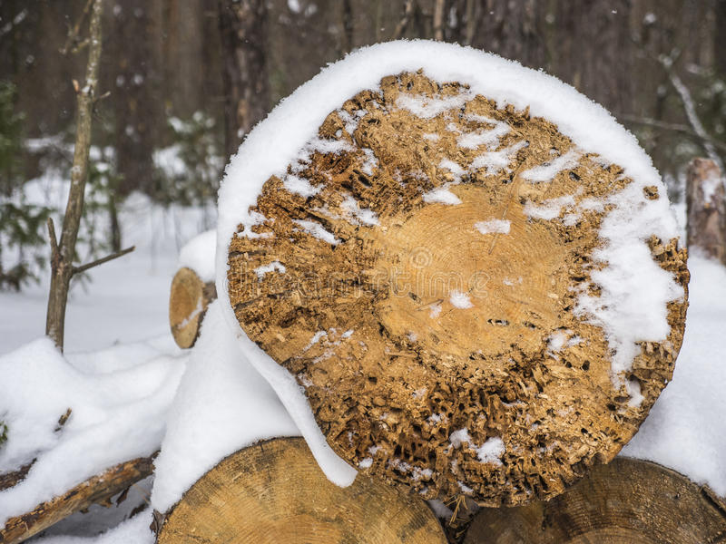 Wooden logs under snow stock images