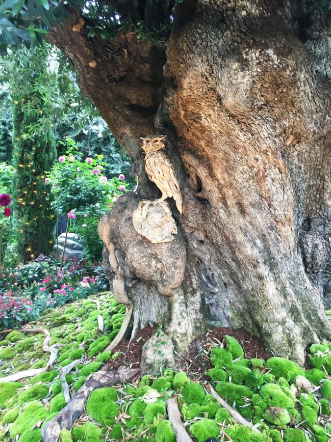 Wooden model of an owl sitting on the trunk and carved out of a huge tree of a public garden in Singapore.  royalty free stock image