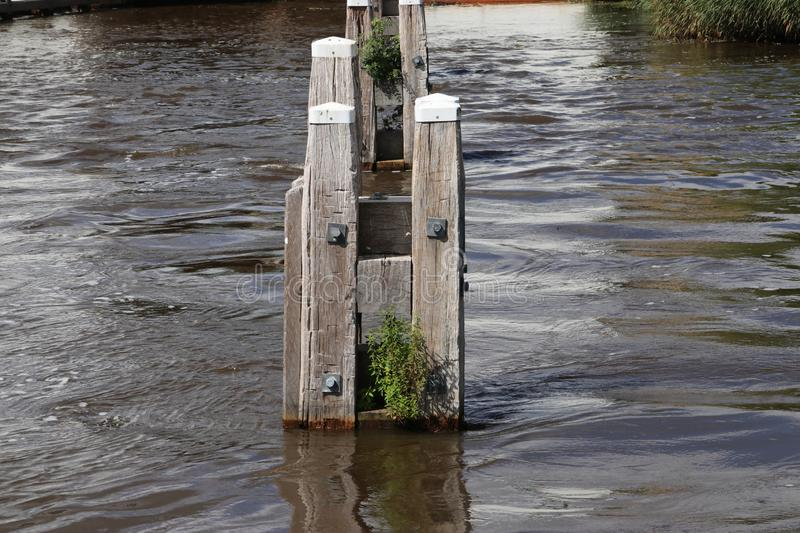 Wooden mooring posts in the water at the Lemstervaart in the Netherlands. royalty free stock photos