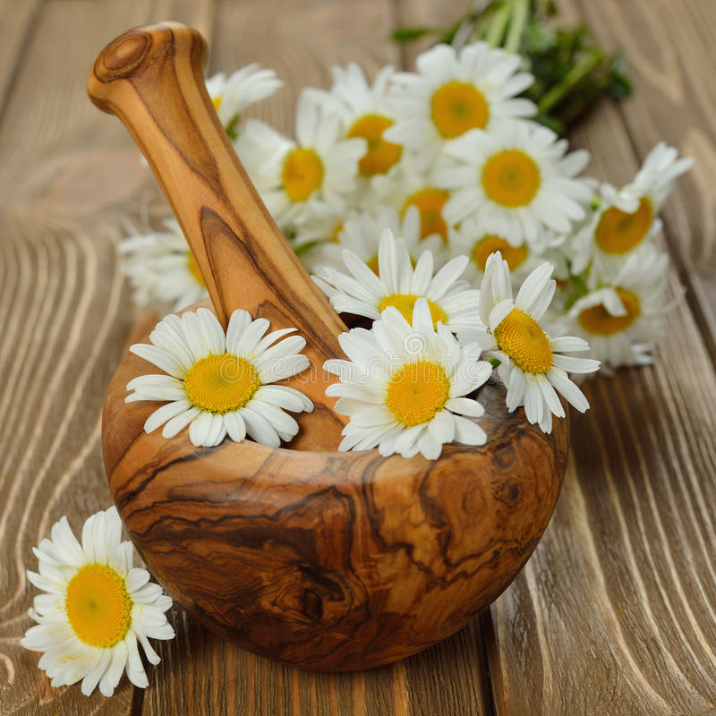 Wooden mortar and daisies royalty free stock image