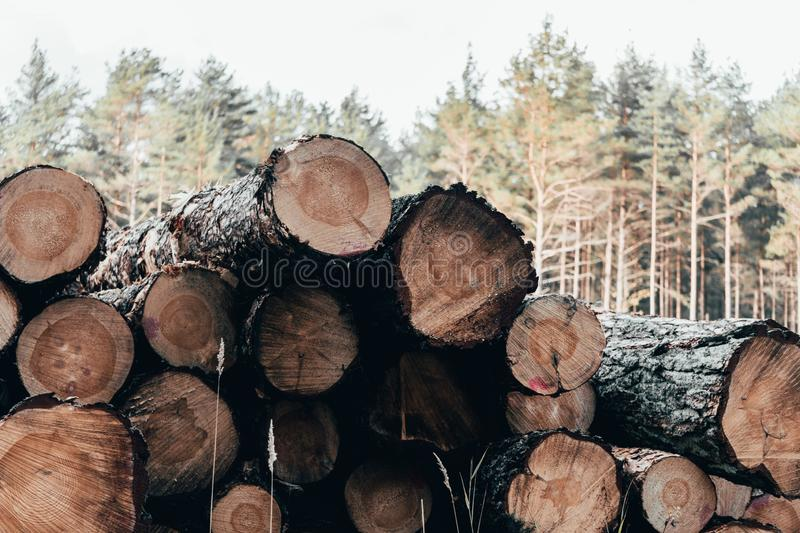 Wooden natural cut logs in autumn forest royalty free stock photography