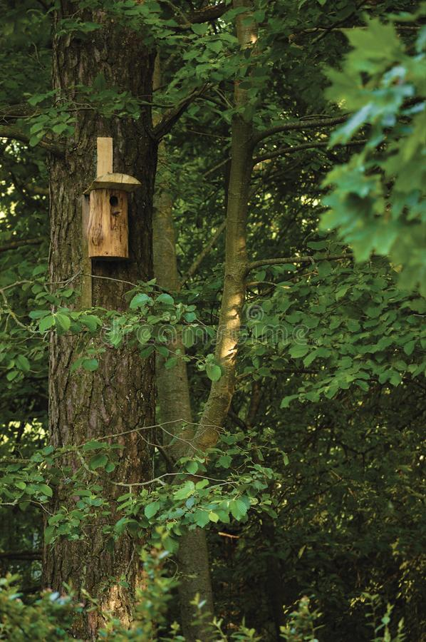 Wooden nest nestling timber box, starling bird house, large tree trunks and branches, birdhouse in sunny summer woods lush foliage stock photos