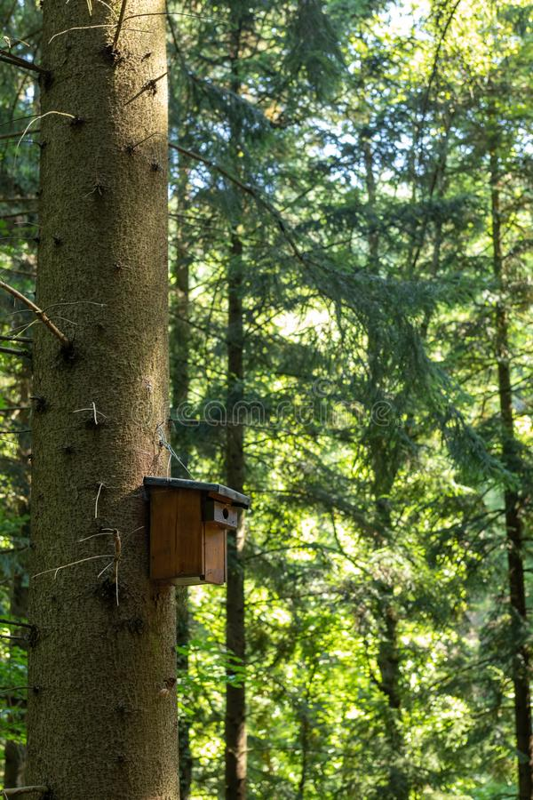 A wooden nesting box attached to a tree in the black forest in summer stock photo