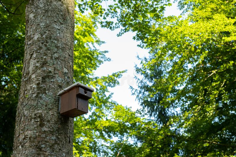 A wooden nesting box attached to a tree in the black forest in summer stock photos