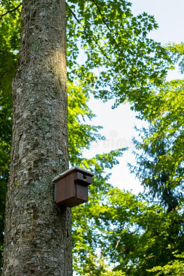 A wooden nesting box attached to a tree in the black forest in summer royalty free stock photos