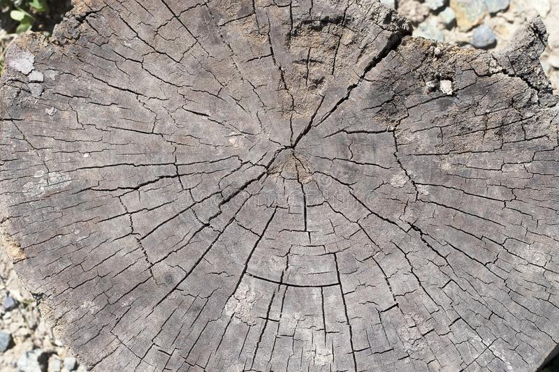 Wooden old stump, wood texture background. Sawn tree with cracks. Round cut down tree with annual rings royalty free stock photography