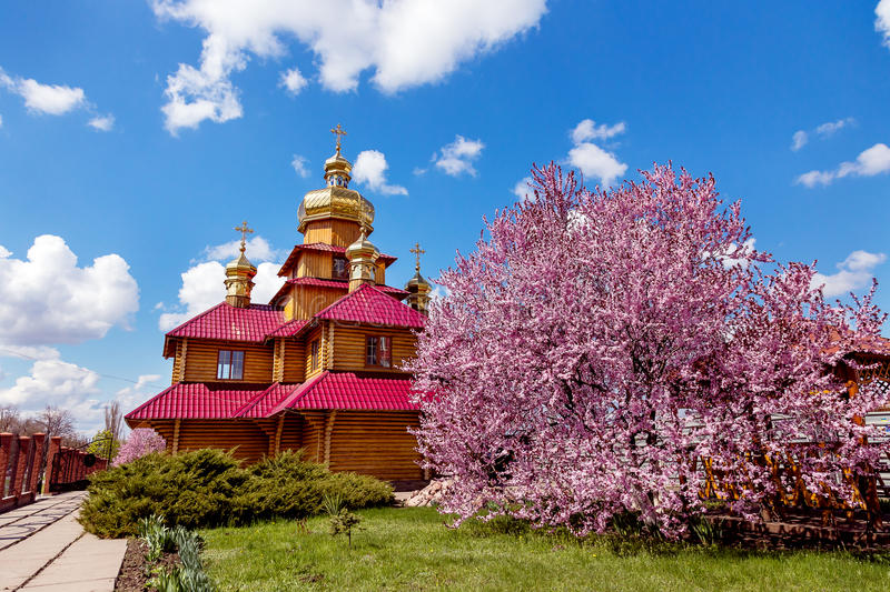 Wooden Orthodox church and a purple blossoming magnolia tree at sunny day. Kriviy Rih, Ukraine, April 22, 2015. Wooden Orthodox church and a purple blossoming stock photos