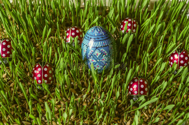 Easter wooden painted blue egg among ladybirds on sprouted barley. Wooden painted blue egg among chocolate ladybirds on sprouted barley stock images