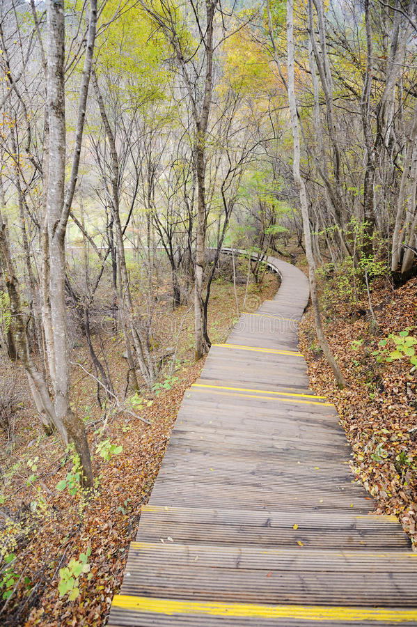 Download Wooden Path In Autumn Forest Stock Image - Image: 27404037