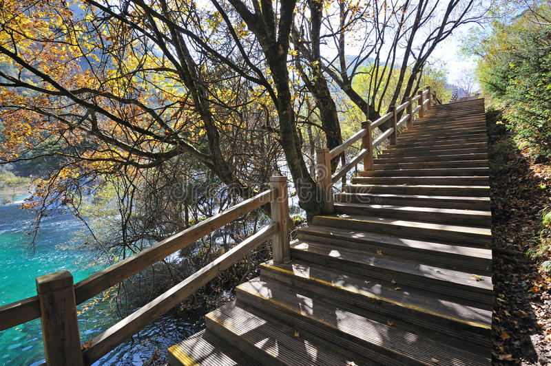 Download Wooden Path In Autumn Forest Stock Photo - Image: 28100150
