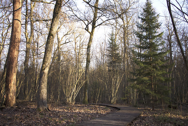 Wooden path through the forest stock photos