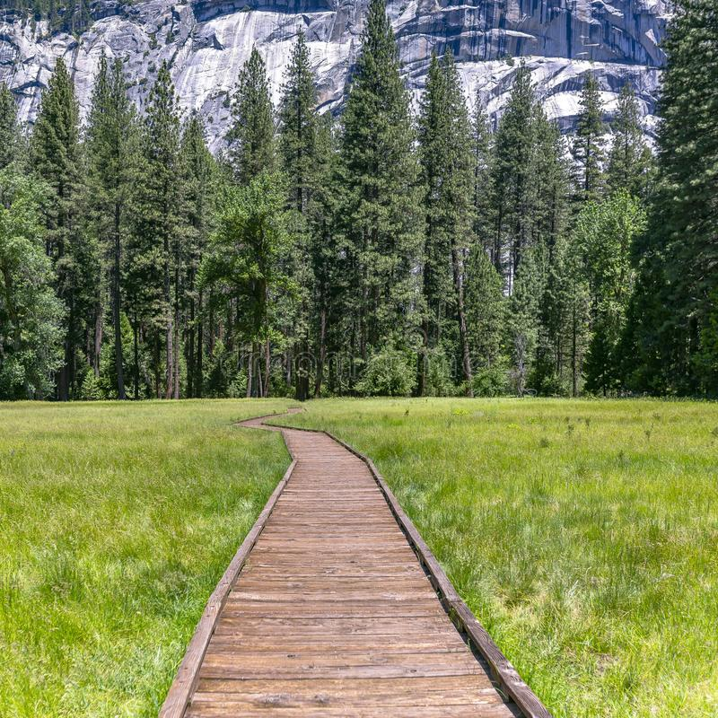 Wooden path on a grassy terrain in Yosemite CA. Wooden path running through a grassy meadow in Yosemite, California. The pathe leads to towering pine trees stock photo