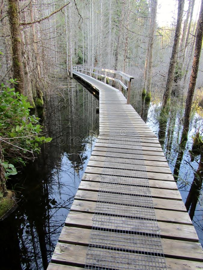 Wooden path on a hiking trail across a swamp lake. Smuggler Cove Marine Provincial Park, BC, Canada stock photo
