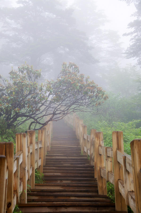 Free Wooden Path In The Forest Royalty Free Stock Photography - 25627977