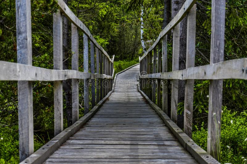Wooden path through the woods. Wooden path made by planks through the woods stock photos