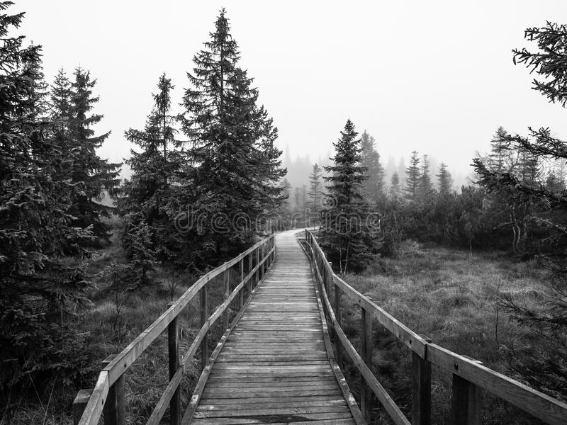 Wooden path in peat bog stock photography