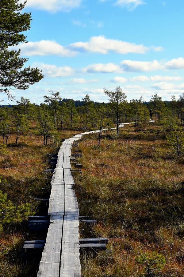 Wooden path through the peat bog stock photo