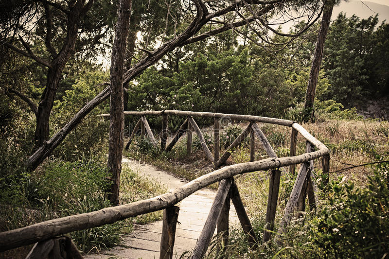 Wooden path in the pine wood in vintage effect. Wooden path in the pine wood. Shot in Alghero. Vintage effect stock image