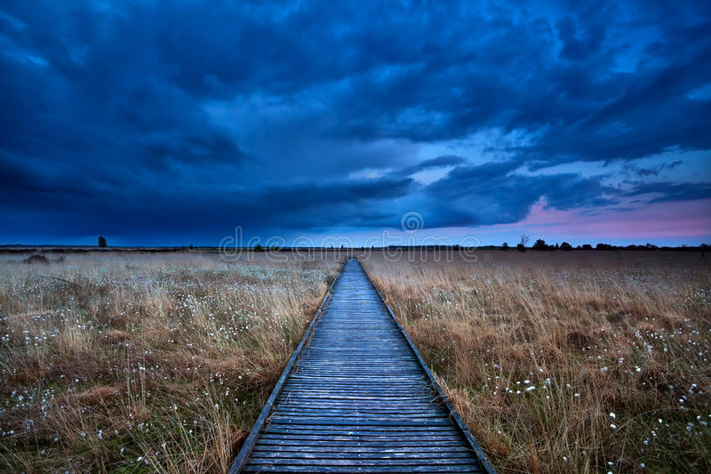 Download Wooden path through swamp stock photo. Image of evening - 31934270