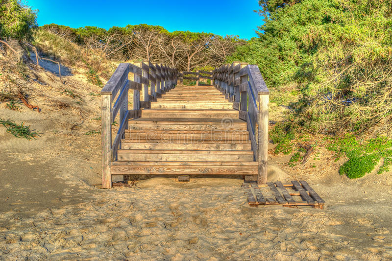 Wooden path to the pinewood royalty free stock photography