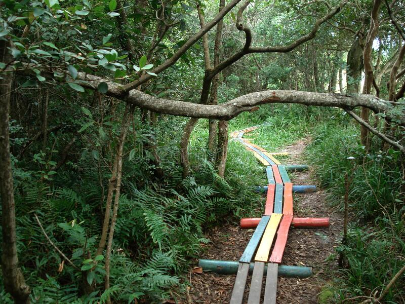 Wooden path through woods royalty free stock photo