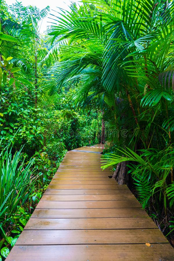 Wooden pathway around mangrove forest. Thapom Krabi Thailand royalty free stock images