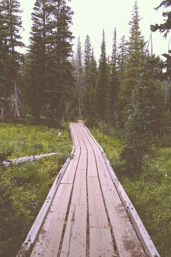 Wooden pathway in a beautiful forest with pine trees royalty free stock photography