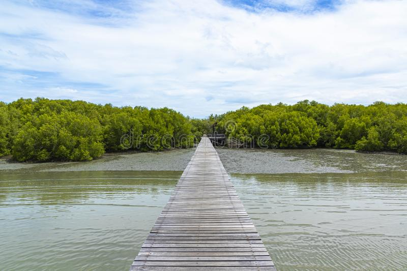 Wooden pathway on the sea to Mangrove forest and blue sky background.  royalty free stock photography