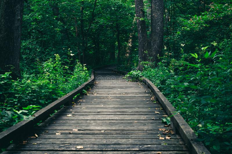 Wooden pathway or walkway from wood planks in forest park stock image