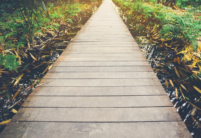 Wooden pathways that align with the beautiful nature around.  stock image
