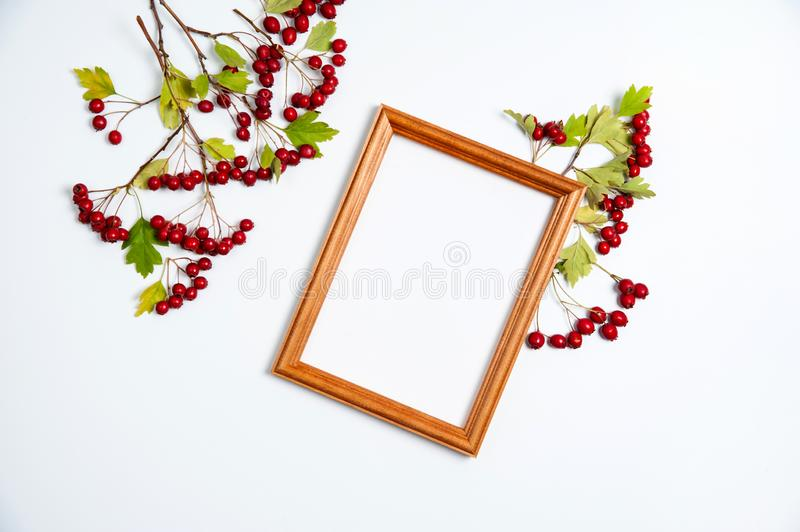 Wooden photo frame, branches with red berries and green hawthorn leaves on white background. Autumn composition. Wooden photo frame, branches with red berries royalty free stock images
