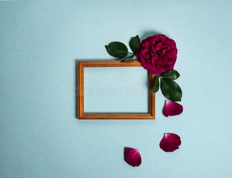 Wooden photo frame, dark red rose on a gray-green background. stock photography