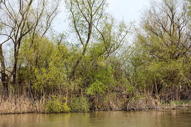 Wooden pier on the Danube River. Spring on Danube river. Flooded trees in the green meadow over the banks of the Danube river in early spring. Danube natural stock photos