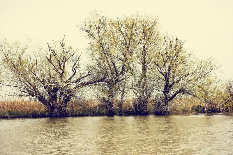 Wooden pier on the Danube River. Spring on Danube river. Flooded trees in the green meadow over the banks of the Danube river in early spring. Danube natural royalty free stock images