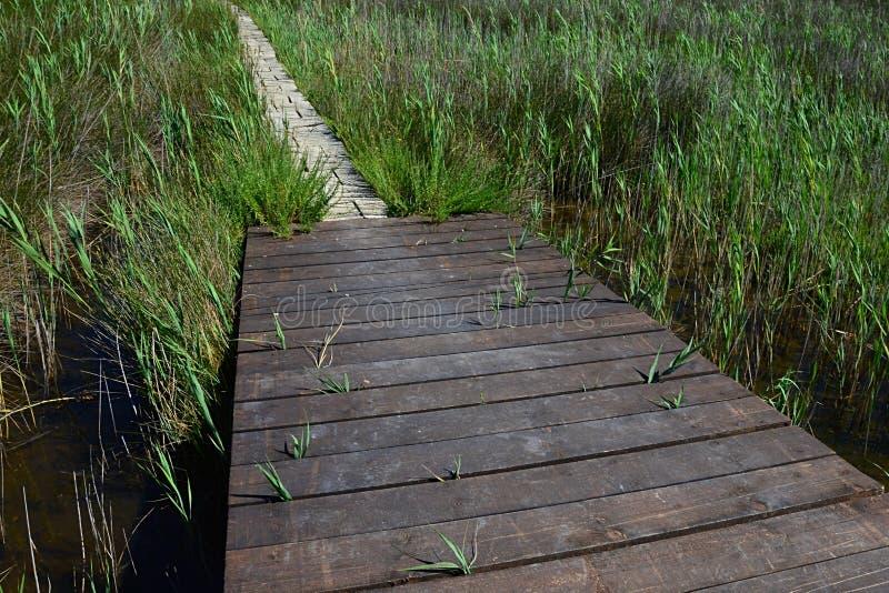 Wooden plank bridge leads to tiled passage across marshy land near healing muds and beaches of Nin, croatia, adriatic. Shot during summer season royalty free stock photos