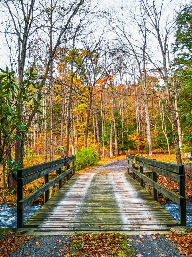 Wooden Plank Bridge royalty free stock image