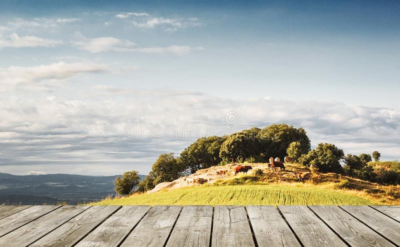 Wooden plank table against a natural farming background in the nature. Empty copy space royalty free stock photo