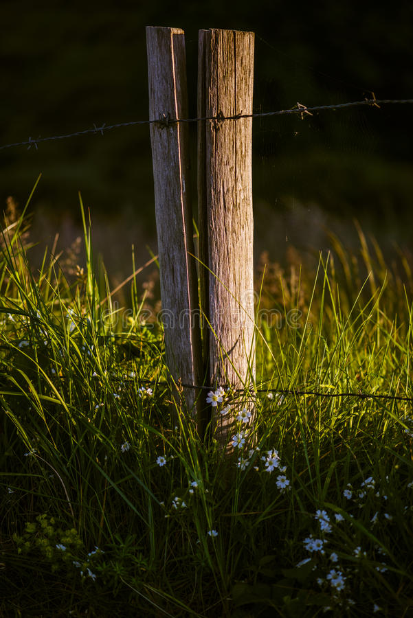 Download Wooden pole with barbwire stock image. Image of yard - 27077275
