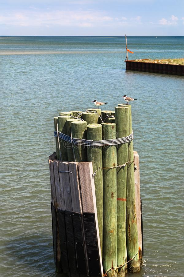 Seascape with wooden poles and seagulls. Wooden poles in Atlantic ocean. Seagulls. Buffering. Pilings. Seascape with wooden poles and seagulls stock photo