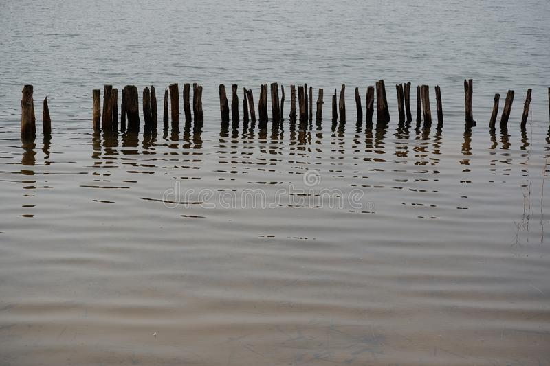 Wooden poles in clear water at the lake. With plants stock images