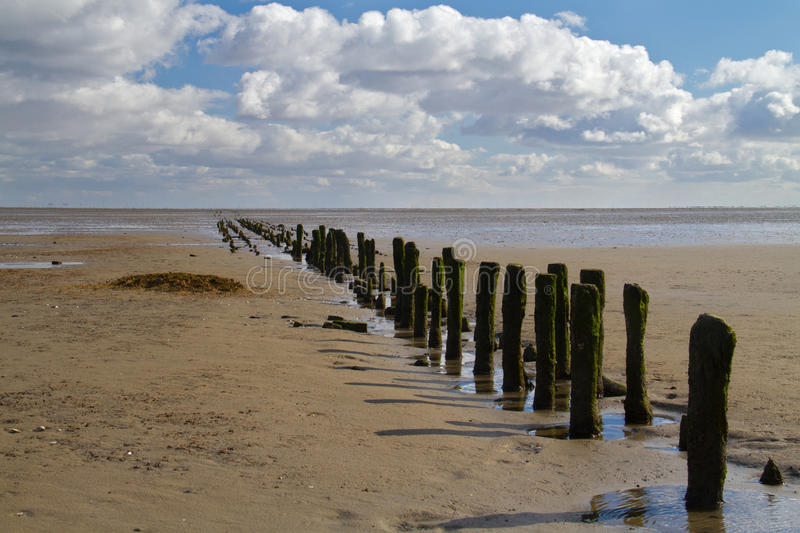 Wooden poles on a mudflat. Or tidal flat in the Dutch Wadden sea royalty free stock image